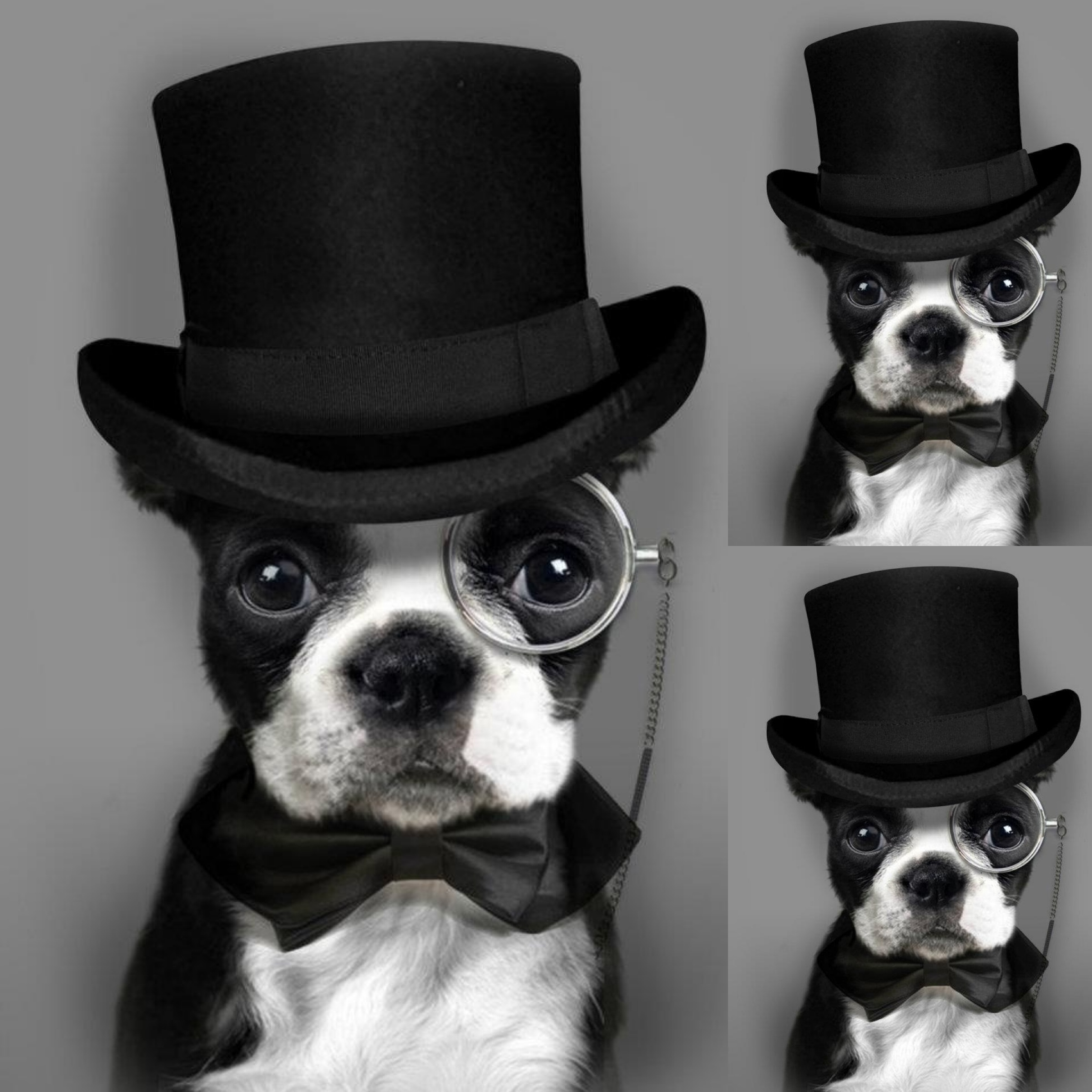 The Dog Has Style!